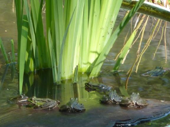 Das Wasser von Vogeltränken sollte zweimal wöchentlich erneuert werden, um der Entwicklung von Mückenlarven vorzubeugen. Das dient auch der Hygiene gegen Salmonellen oder Spulwurmeier. Andere wasserhaltende Gefäße sollten umgekippt und geleert werden (Foto: Remmer Akkermann)